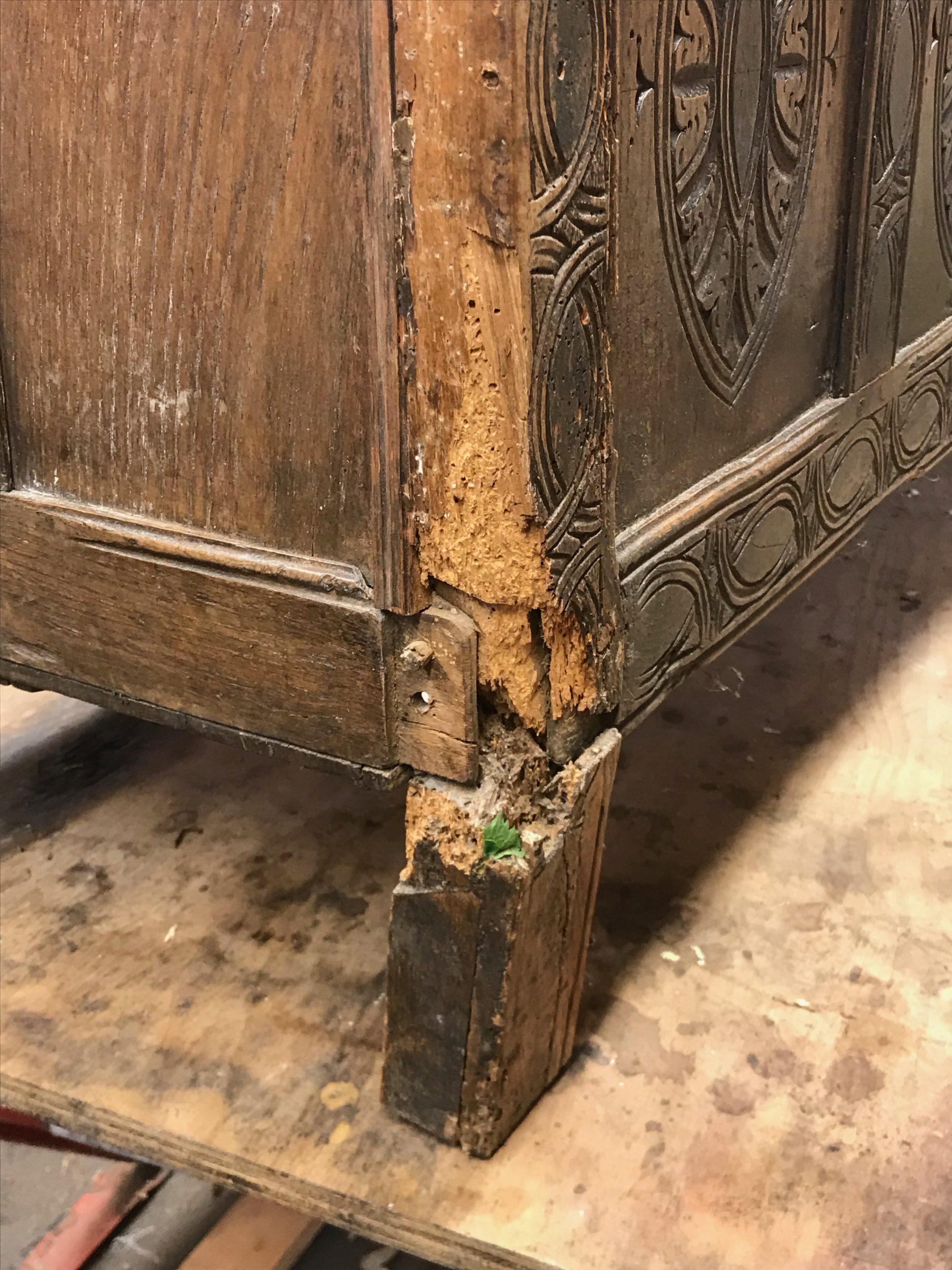 A badly damaged front leg.